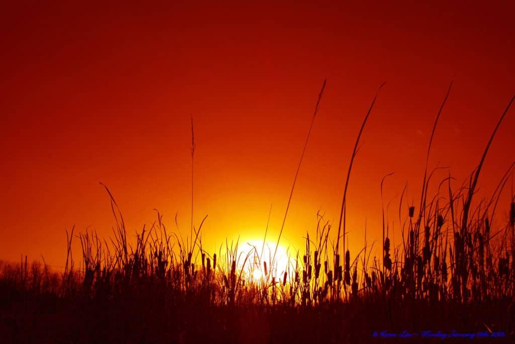 high grass in sunset