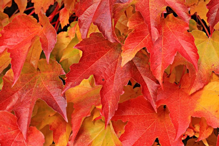 Read more about the article How Long Does It Take For Leaves To Decompose?