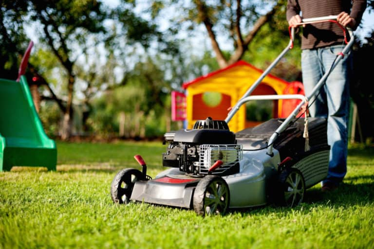 Read more about the article How Long Should You Wait to Mow the Grass After It Rains?