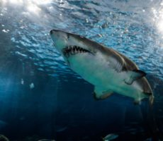 How Many Teeth Do Sharks Have? (with 13 examples)