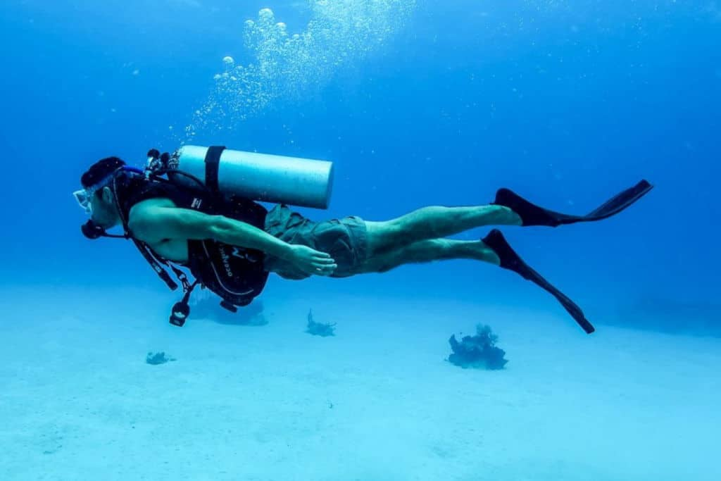 person diving to find rare oyster