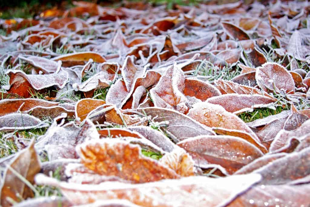 Leaves on ground in cold
