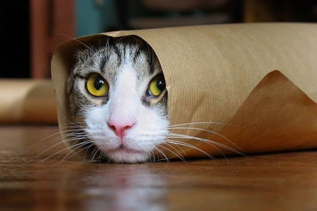 cute funny cat wrapped in paper with head showing