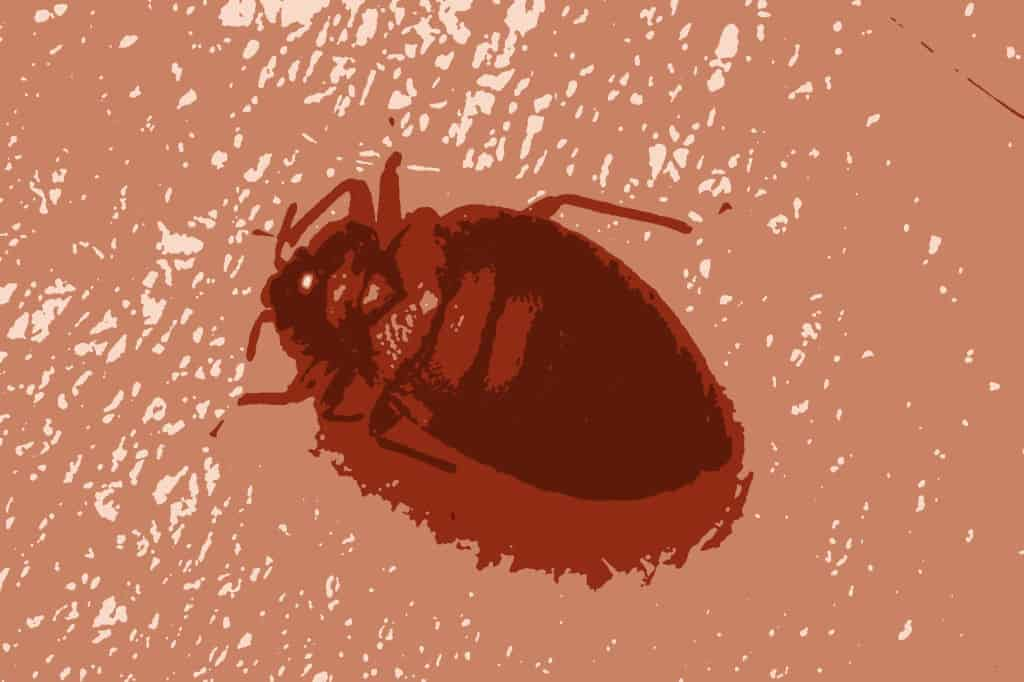 You are currently viewing How Long Do Bed Bugs Live?