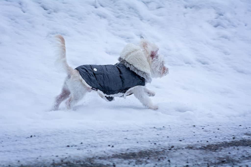 small dog running in snow ice