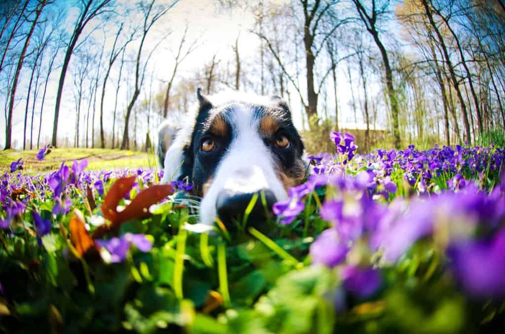 dog fishbowl lens effect