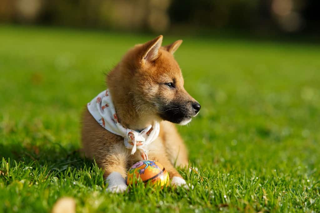dog on grass with ball